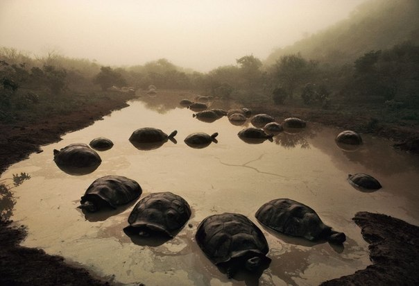 Черепахи купаются на закате
