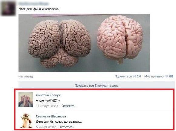 Мозг дельфина