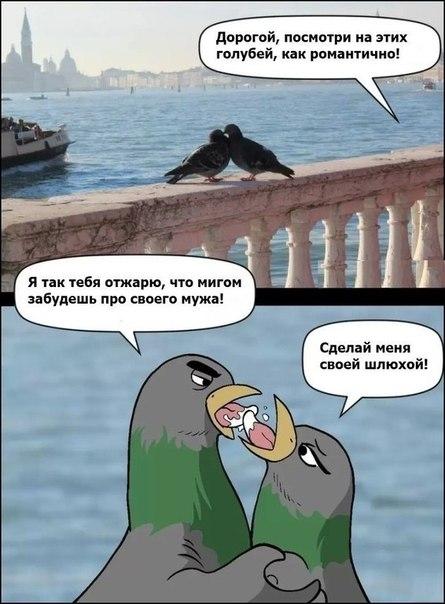 Романтичные голуби