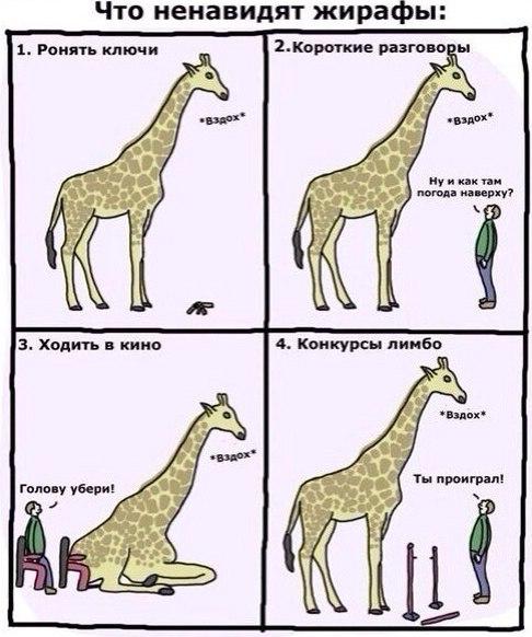 Что ненавидят жирафы