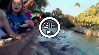 Наглый дельфин