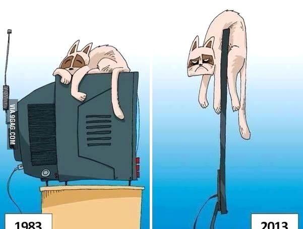 Влияние технологий на кошек