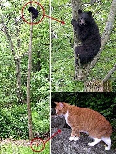 Кошка против мишки