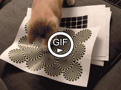 Как сделать игрушку для котенка