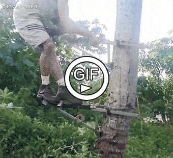 Как подняться наверх пальмы?