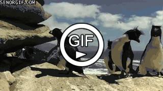 Грациозные пингвины