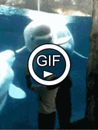Дельфин пугает