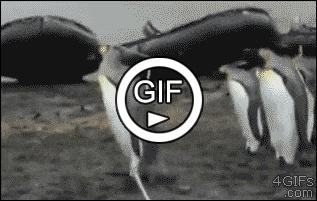 Пингвины и веревка