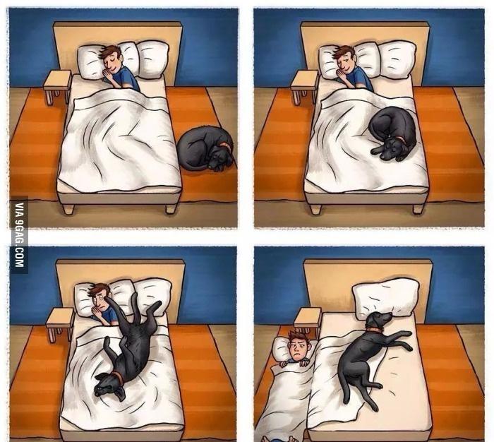 Собаки....