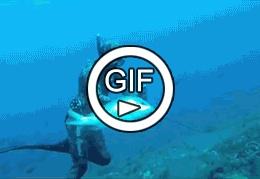 Рыба гопник