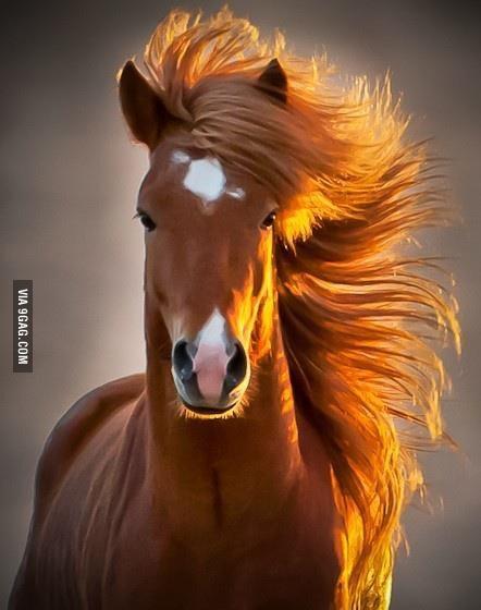 Фотогеничная лошадка