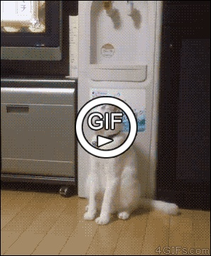 Человекоподобный кот