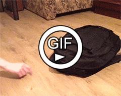 Кот в портфеле