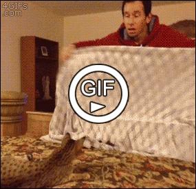 Удивить кота