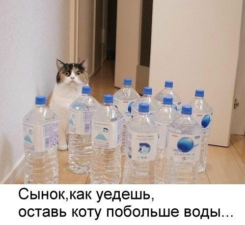 Оставь коту побольше воды