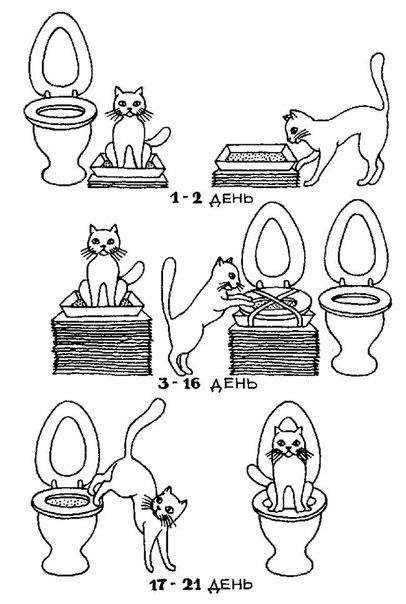 Как приучить к туалету