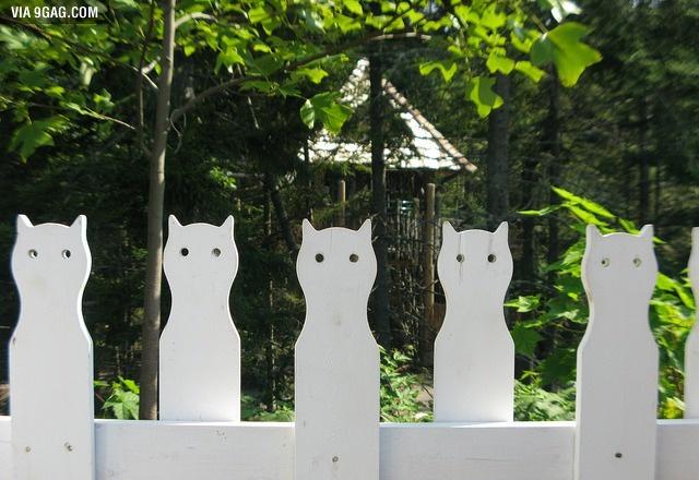 Забор с кошками