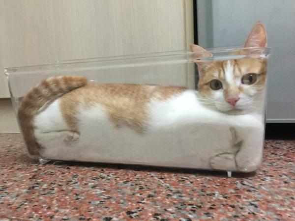 Коты это жидкость