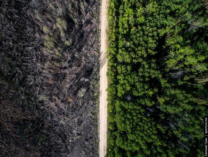 Дорога спасла вторую часть леса