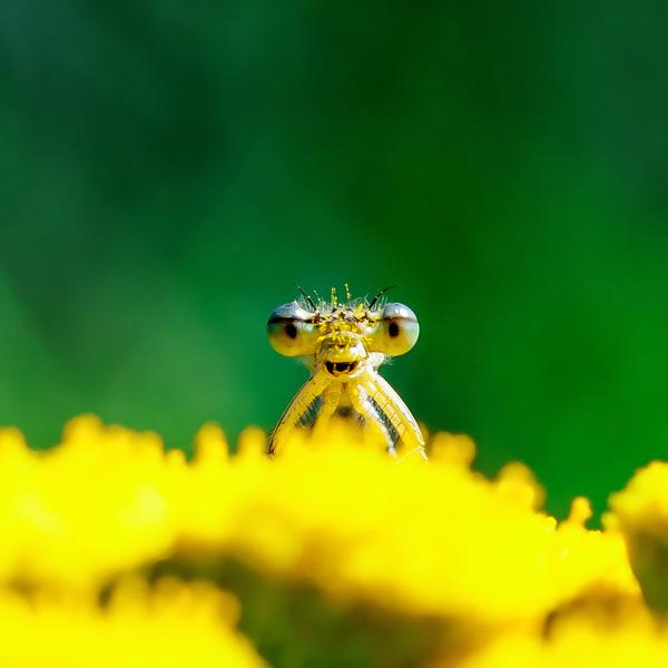 Забористая пыльца